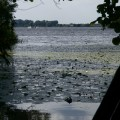 Seerosen-auf-dem-Trebelsee