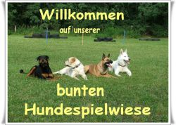 Unsere bunte Hundespielwiese